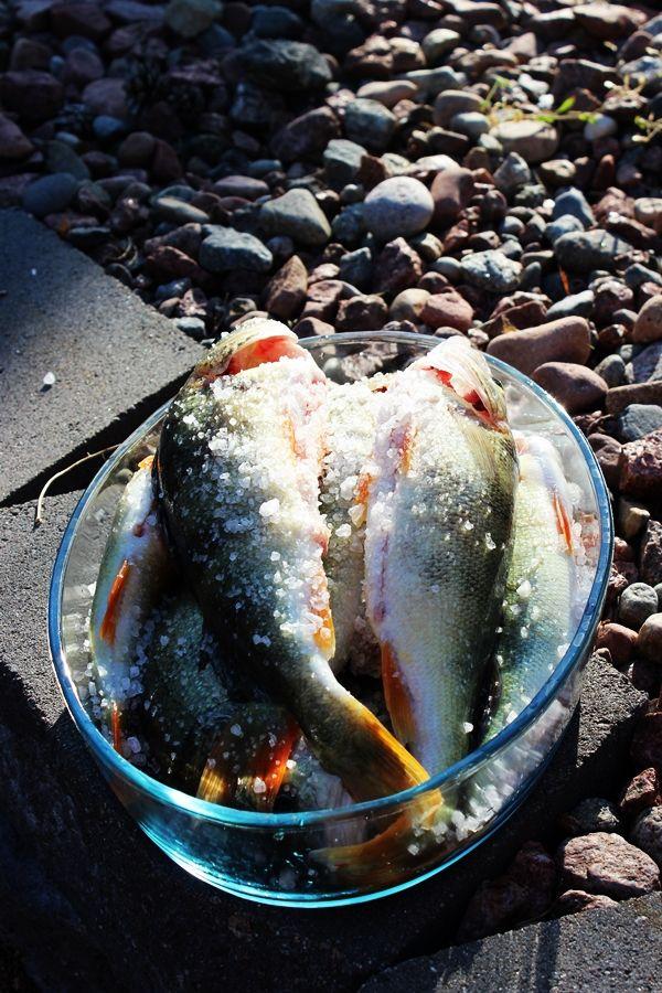 perch / abborre fish / fisk