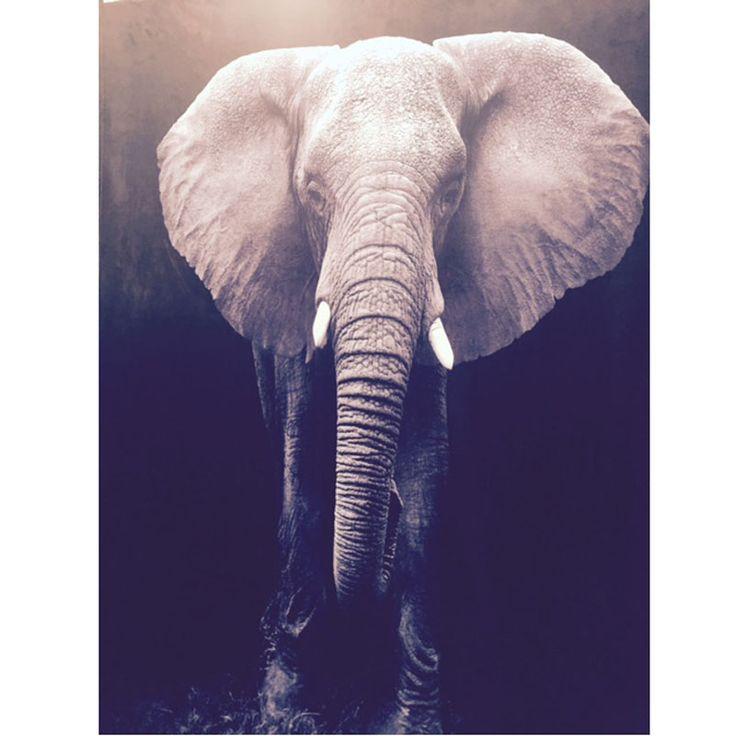 elefant-fleeceplad.jpg (800×800)