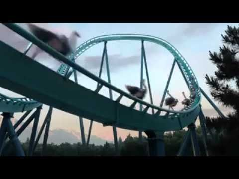 """COOL! Flying elephants, turtle, geese on roller coaster, giraffe high dive, elephants on trampoline, and more... ▶ Bel été sur France 3 - YouTube (""""Bel été sur France 3"""" means """"Good Summer on France 3"""" France 3 is a french television)"""