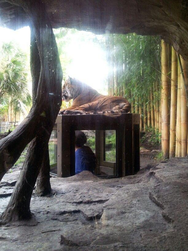 Bush Garden. Orlando