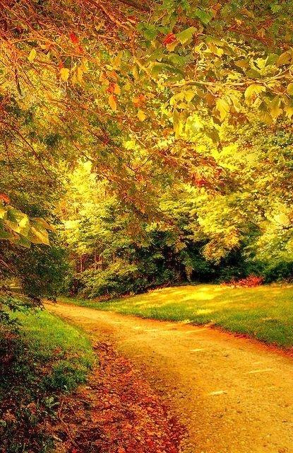 Beautiful Path pinned with #Bazaart - www.bazaart.me