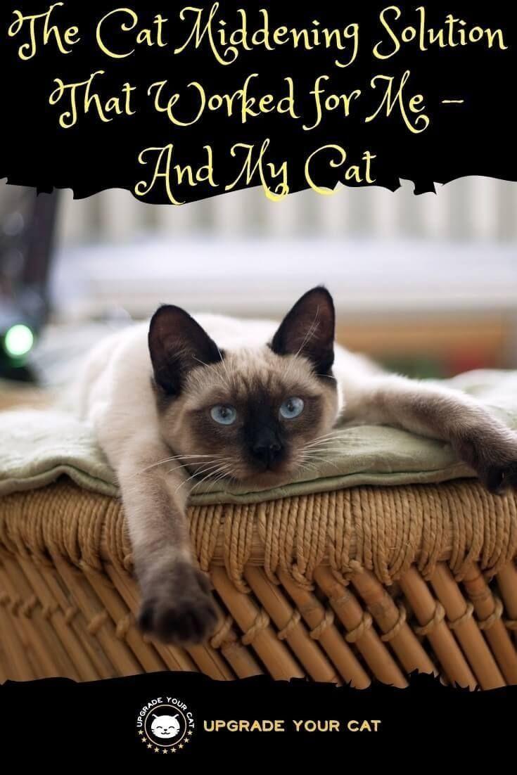 Pin On Curious Cat Behaviors