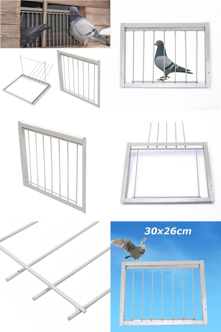 [Visit to Buy]  30CM 40CM White Iron Racing Pigeon Bird Bob Wires Bars Entrance Fantails Tumbler LOFT Pet Supplies  #Advertisement