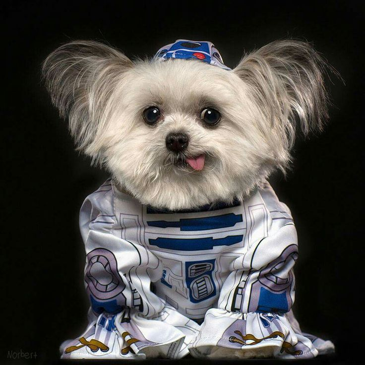 May The 4th Be With You Dog: 1000+ Images About Norbert The Dog On Pinterest
