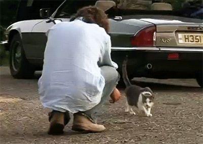 Awww, he loves kitties! RIP, Fusker, old chap.