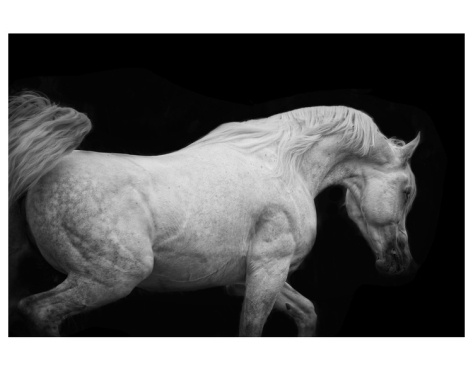 Arabian Stallion Premium Giclee Print by Melanie Snowhite - stair well landing to upstairs wall