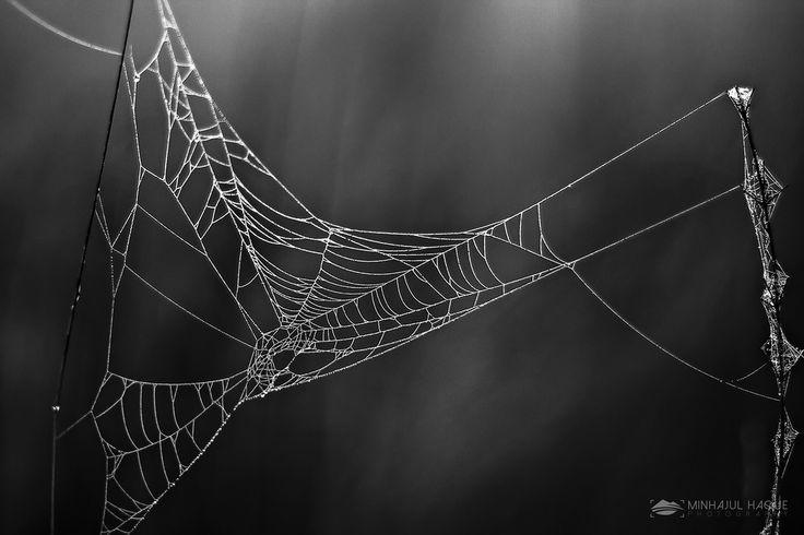 Glowing Cobweb