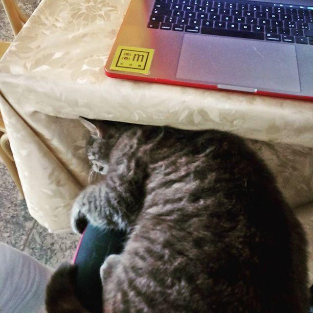 Nuovi amici al bar #mondoracom #digitalnomad #cat #remotework #valmasino #newcolleaguenewcolleague,digitalnomad,valmasino,remotework,mondoracom,cat