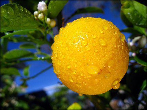 #Herpes labiale? Provate il #limone