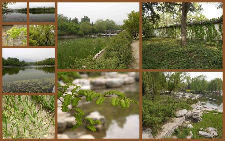 Beauty in Beijing Plant Garden (7)