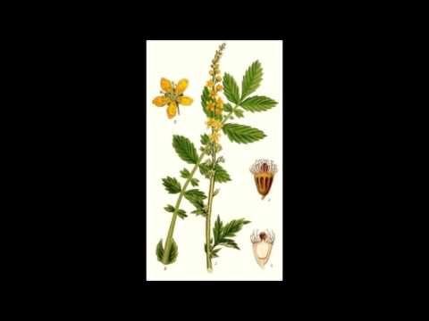 Liečivé rastliny - YouTube
