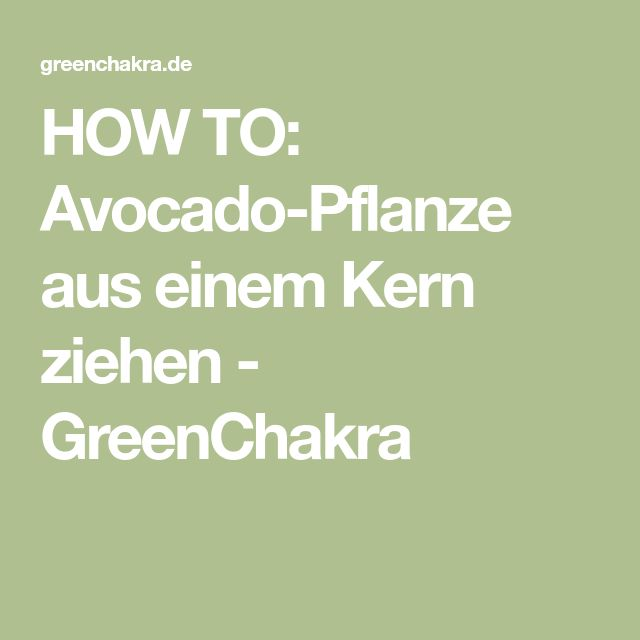 how to avocado pflanze aus einem kern ziehen greenchakra ich pinterest. Black Bedroom Furniture Sets. Home Design Ideas
