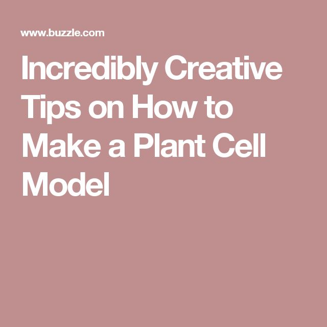 Best 20+ Plant Cell Labeled ideas on Pinterest | Plant ... - photo#8