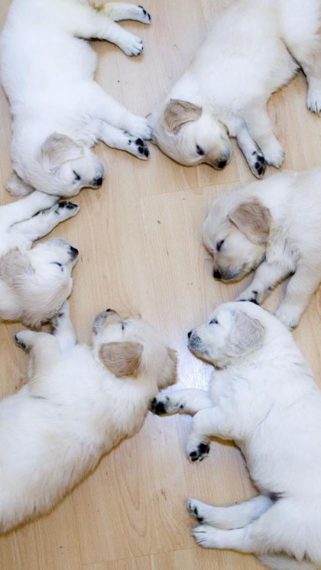 Puppies....so cute