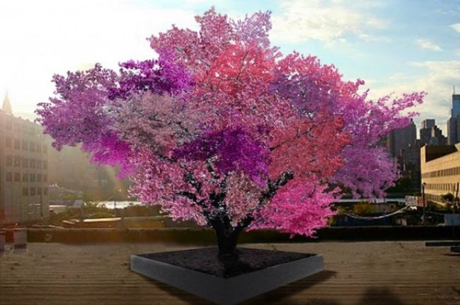 16 Wonderful Trees That Prove Nature Is Capable Of Amazing Things