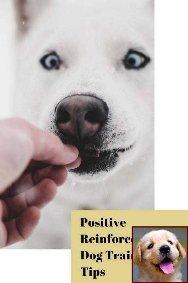 Dog Behavior New Baby And Clicker Dog Training Petsmart Dog