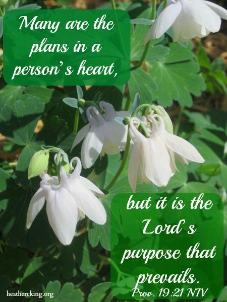 Best 20+ Proverbs 19 ideas on Pinterest   Proverbs 21 19, Trust gods plan and Proverbs verses