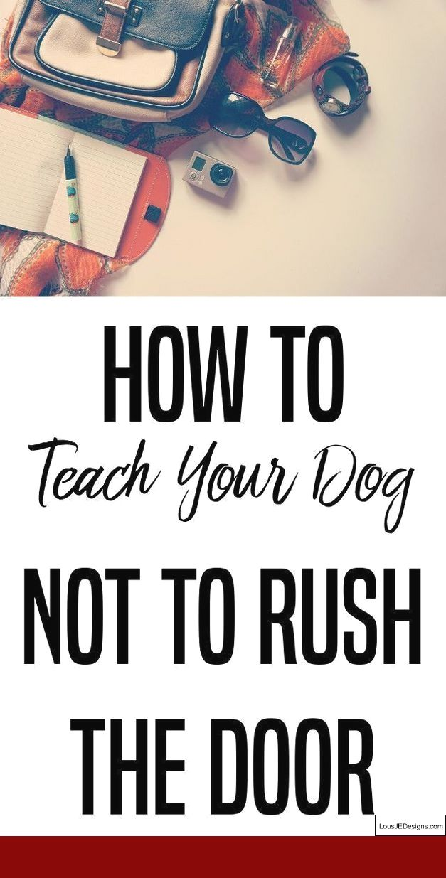How To Train Your Dog To Be Off Leash And Not Run Away And Pics Of