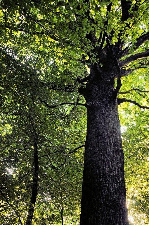 17 best images about jura frankrijk on pinterest tes les gorges and y t - L arbre a souhait ...