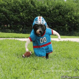 Dog football - www.gifsec.com