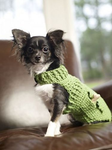 Ravelry: Dapper Doggie Sweater free pattern by Sharon Mann