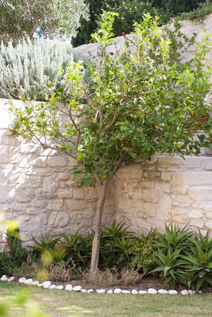 25 best GREEK GARDENS images on Pinterest   Greek garden ...