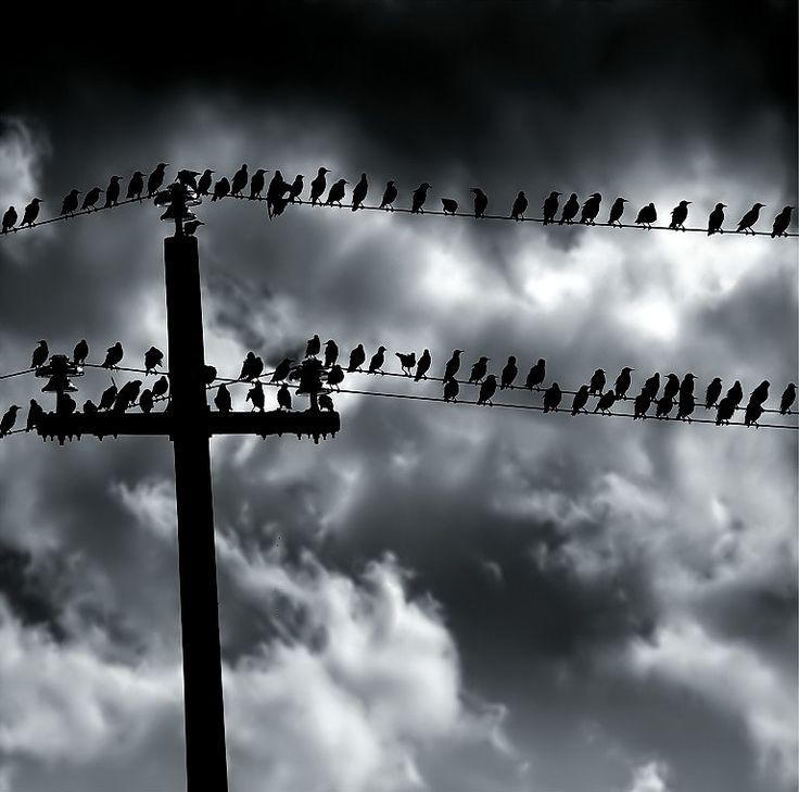 The birds.. by Edmondo Senatore on 500px