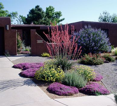 595 best desert landscaping images on pinterest for Low maintenance drought tolerant plants