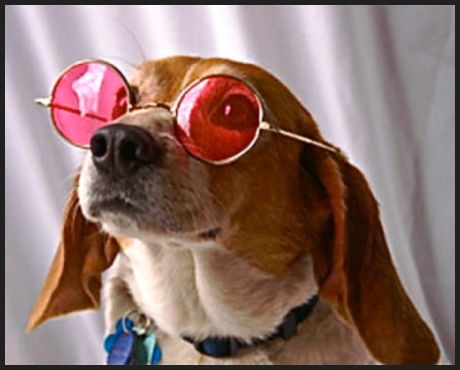 """Seeing the world through """"rose-colored glasses"""" will give you more success, health and happiness. During the """"Change"""" your hormones and life seem out of balanced. That's why we are here to support you in """"retraining your brain"""" so you can Close the Happiness Gap and get balanced! Double click the picture to read more .."""