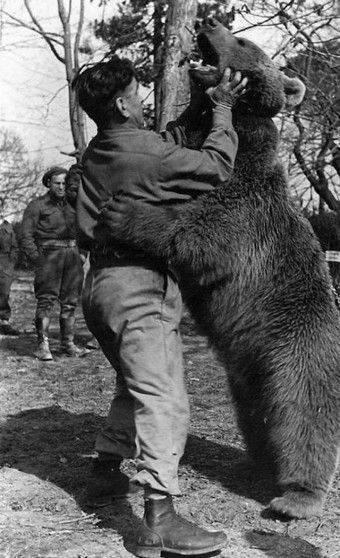 Today I Found Out: There was a  Bear Who was Officially a Member of the Polish Army During WWII
