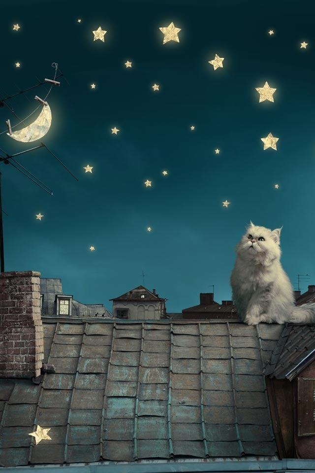 Gato cantando a la luna.