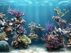 aquariums - Bing images