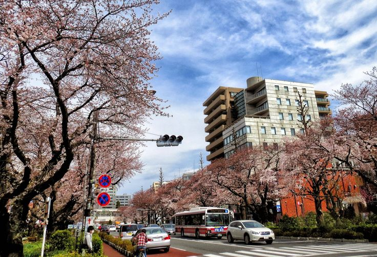 Japão: Comemore a chegada da primavera desfrutando o sakura | #PrimaveraSakura #FimdoInverno #oriente