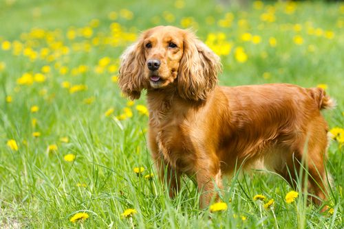 When choosing the right dog breed for you and your family, it's important to keep your children in mind. Their personalities, ages and your diligence in teaching them how to properly interact with animals will play a key part in …