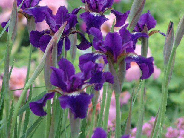 15 best garden ideas images on pinterest backyard ideas for Low maintenance summer plants