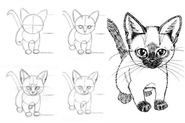 How To Draw Cat And Kittens Offers Step By Step Instructions For Beginning And Advanced Artists Cat Drawing Tutorial Kitten Drawing Cat Face Drawing