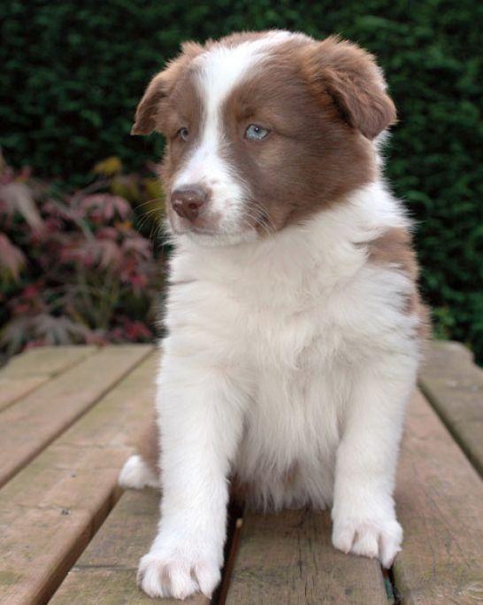 Medium Sized Dog Breeds That Don T Bark