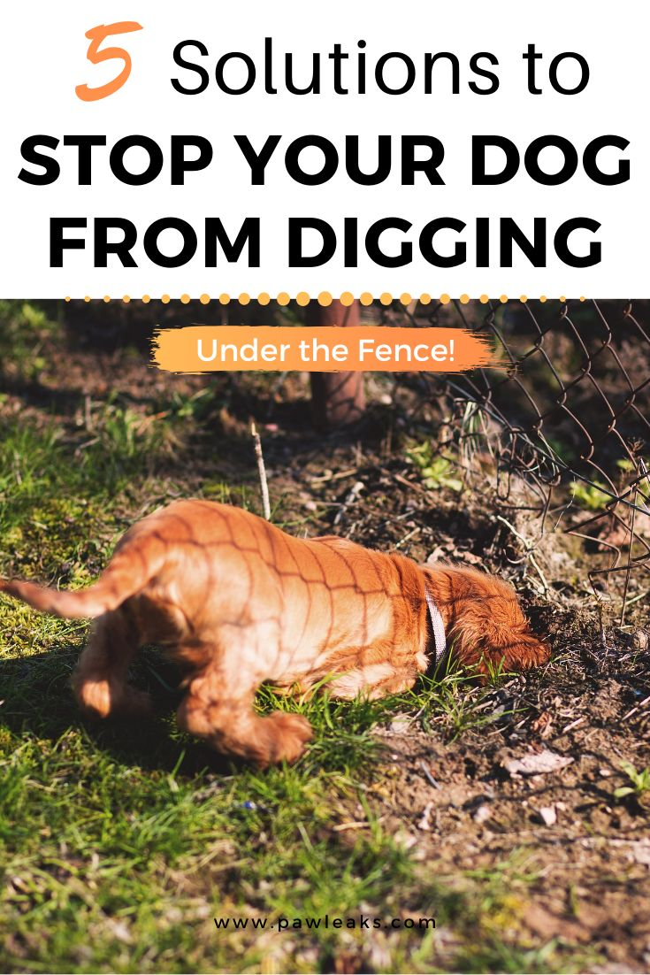 5 solutions to stop your dog from digging under the fence