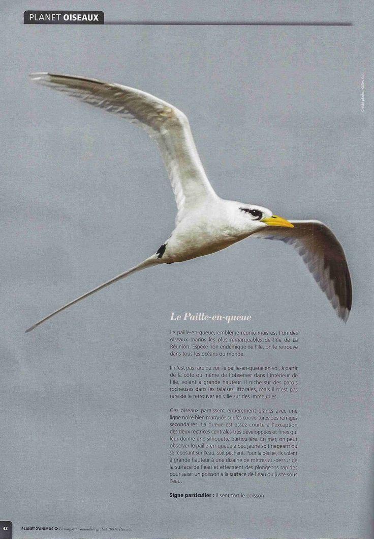 Leçons de choses: Les oiseaux de la Réunion
