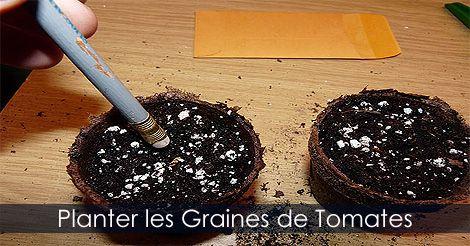 Planter #graines de #tomates. Guide : http://www.jardinage-quebec.com/guide/semis-de-tomates/graines-tomates-3.html