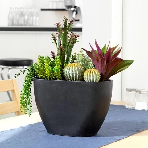 41 Best Images About Office Plants On Pinterest Lessons