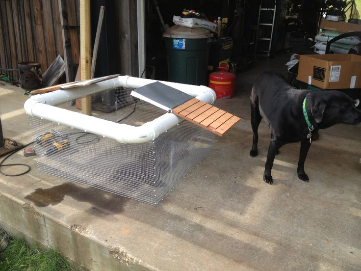Turtle trap - PVC pipe, chicken wire and some scrap wood