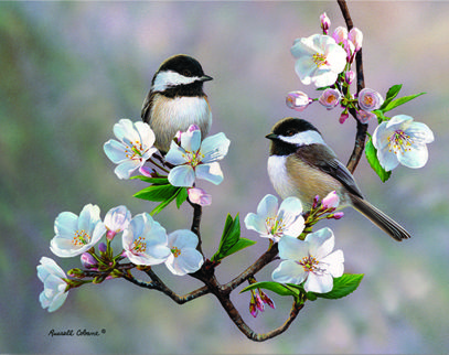 Cobane Studio: Cherry Blossom Chickadee  12 x 16 (inches) print size  wrapped canvas Giclee Print; copyrighted artwork