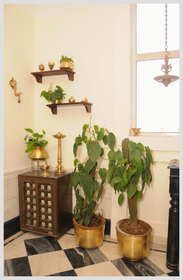 brass corner (Philodendron scandens is used in the containers as a way to green up the room. In India it is considered good luck to have such plants in one's home)
