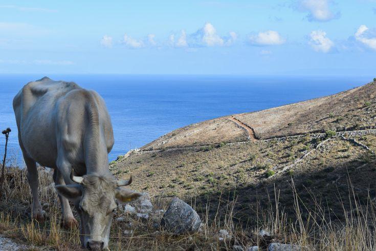 Paysages arides, routes désertes, villages de pierres abandonnés, légendes mythologiques, plages sauvages : le Magne, péninsule du sud du Péloponnèse ne ressemble à rien d'autre en Grèce. On vous emmène sur les routes de cette région unique.