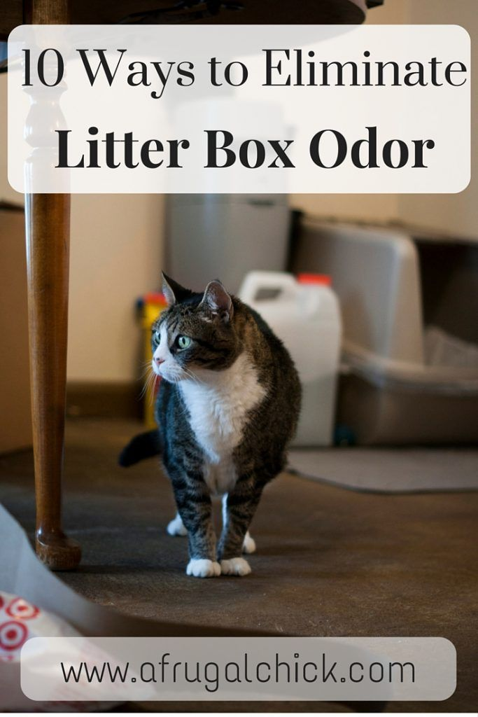 Litter Box Smell Solutions- Follow these 10 simple steps to keep your small space smelling like you don't have a litter box! Litter Box Smell Solutions don't have to be expensive! #ad #LitterOdorRevolution