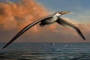 El Universal 140707- Ciencia - Encuentran restos fósiles del ave más grande que ha existido