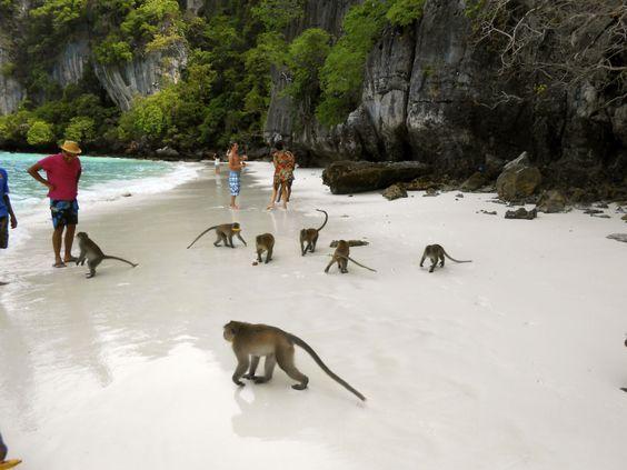 I can't decide. Monkey Beach, Ko Phi phi island, Thailand?