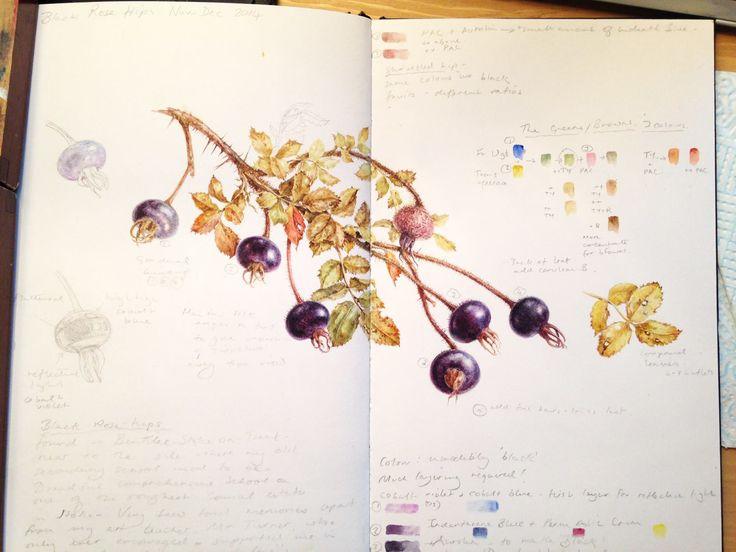 Как нарисовать ботанический скетч? — iris-art-school.com