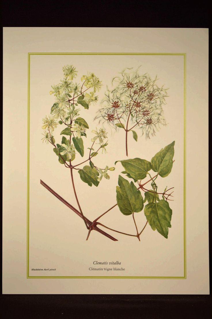 452 best Nature / Home Decor Ideas images on Pinterest | Fungi ...